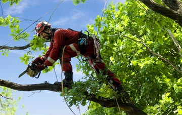 find trusted rated Southwark tree surgeons