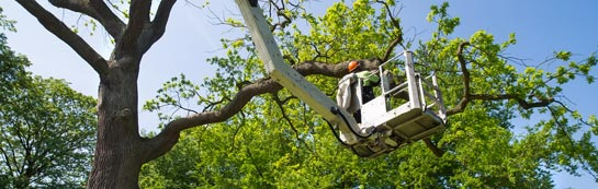 Southwark tree surgery services