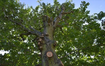 what is Southwark tree surgery?